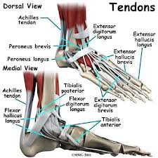 Tendon Pain, Tendonitis, tendonopathy, Tendon Rupture, foot pain, ankle pain,